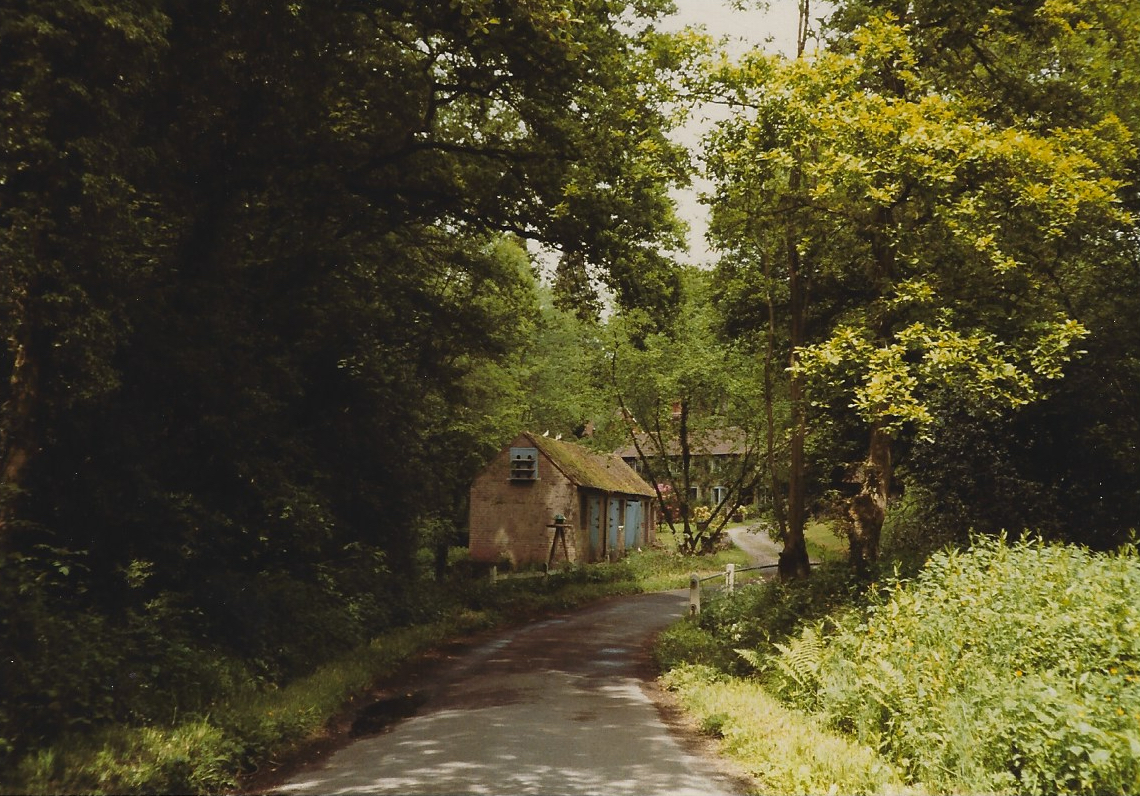 Colour photograph of tree-lined country road with a house in the distance.