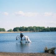 Colour photograph of horse and rider in large pond, with trees in distance.